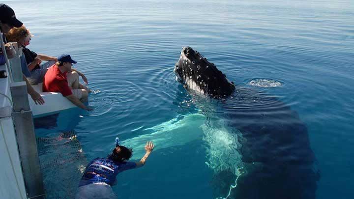 hvalsafari sør afrika