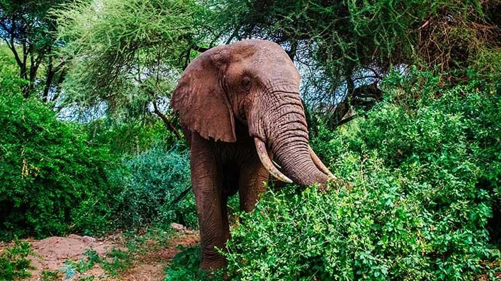 safari sør afrika