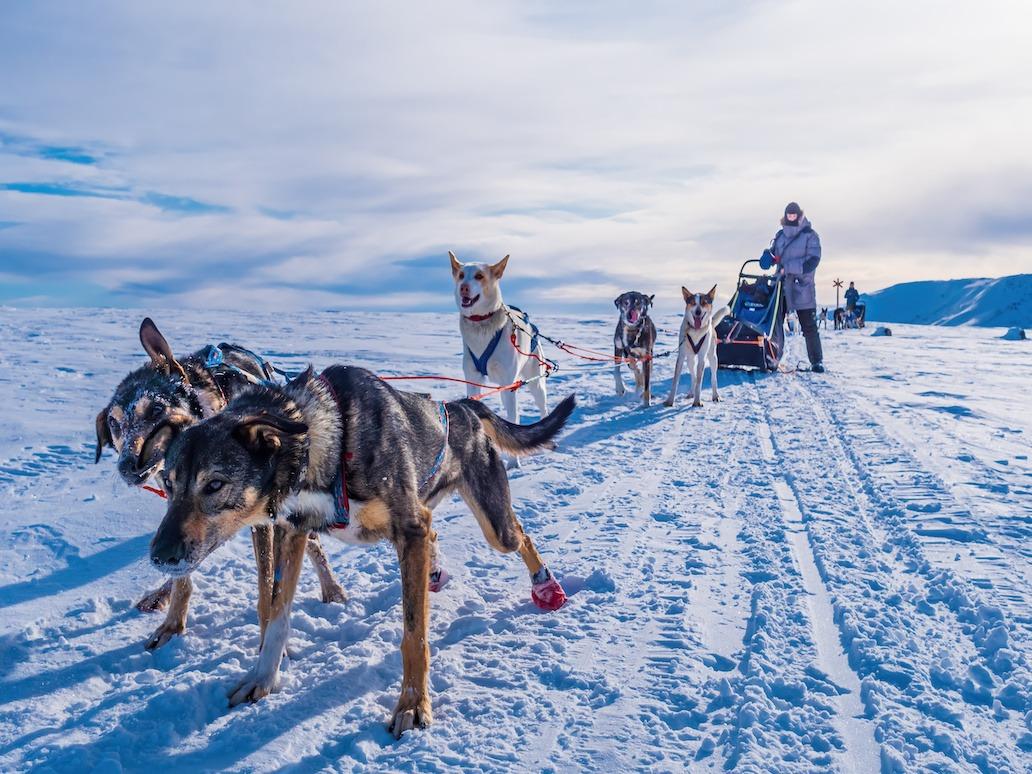 Firmatur til Trøndelag på hundeslede