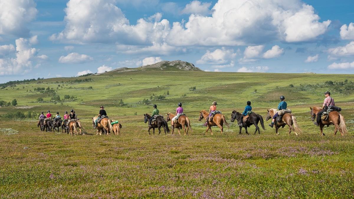 Hesteridning gruppe i Trøndelag