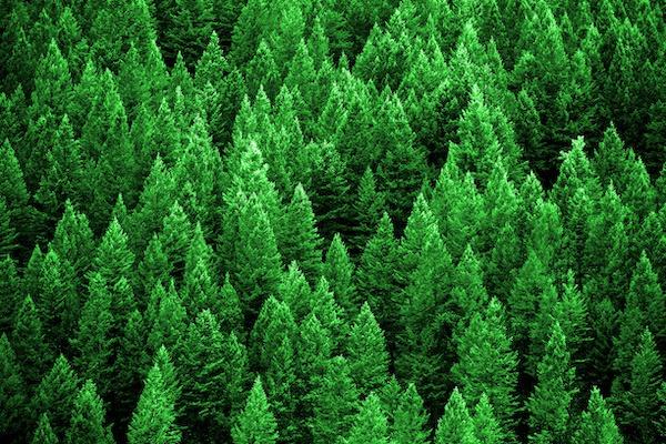 Firmatur for jordbruk og skogbruk