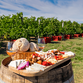 vingård |frankrike |aktivitet |signaturreise