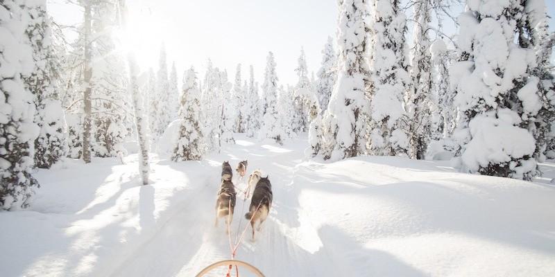 Hundeslede | dog sledge | Ringsaker | aktivitet